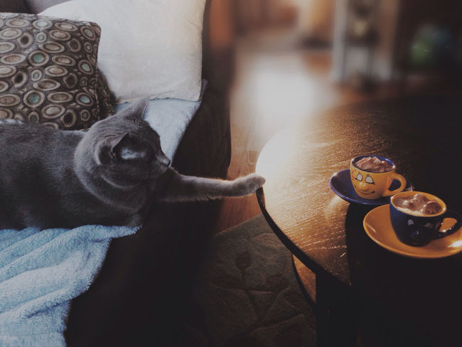 Coby wants to share the espresso. No, Coberton! Cami's Buddies Cat Morning Good Morning Espresso Cat Burglar EyeEm Pets Coberton Pets Corner