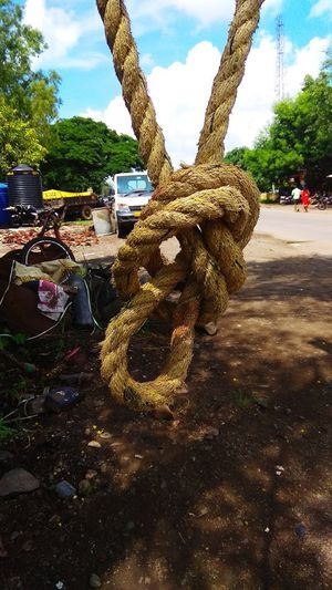 Close-up of rope tied to tree