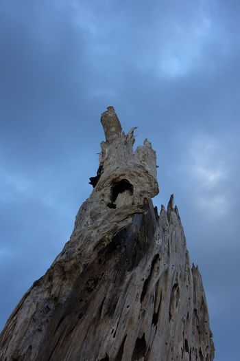 Wood Deadtree Clouds And Sky Belitung Island