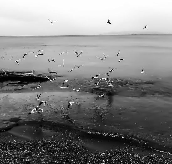 Seagull, flying, sea , reflection , nature ,spring by elvio Bird Beauty In Nature Outdoors Sky Blackandwhitephotography Fine Arts Photography Eye Em Nature Lover Travel Destinations GalleryOfModernArt Black And White Nature Seagull, Birds, Flight, Fly, Hover, Feathers, Wings, Beaks, Span, Artphotography Beauty In Nature Tranquility Fragility Art Is Everywhere EyeEm Diversity Break The Mold Break The Mold Art Is Everywhere The Great Outdoors - 2017 EyeEm Awards EyeEmNewHere