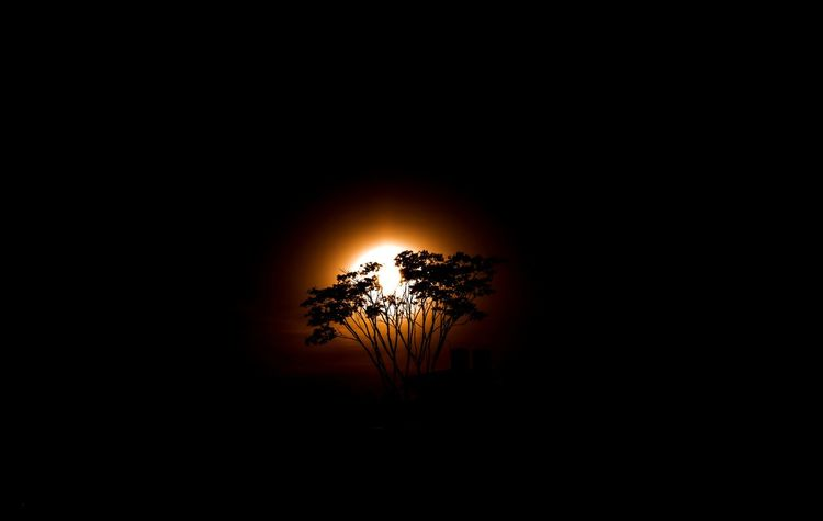 Rising of a new sun with a new hope. Sunrise Sun Sunny Dark Landscape Landscape_Collection Morning Morning Sky Morning Sun Morning Light Landscape_photography Landscape #Nature #photography Tree Astronomy Silhouette Sky Single Tree Treetop Sky Only Long Shadow - Shadow