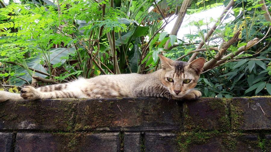 Portrait of cat lying by plants