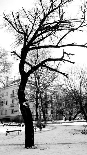 Blackandwhite Winter Tree Outdoors