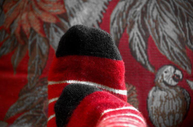 TK Maxx Socksie Festive Season  Spirit Stay Cozy Wild And Wooly Winter Days Home Body Tapestry Tapestries Curling Up Relaxation Red Beauty And Elegance Virgin Wool