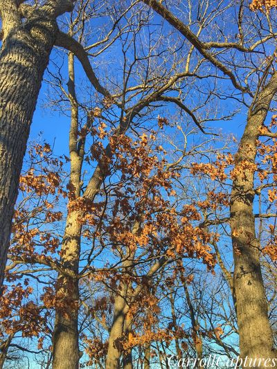 Nature. Low Angle View Nature Sky Branch Beauty In Nature Growth Blue Outdoors No People Day Scenics
