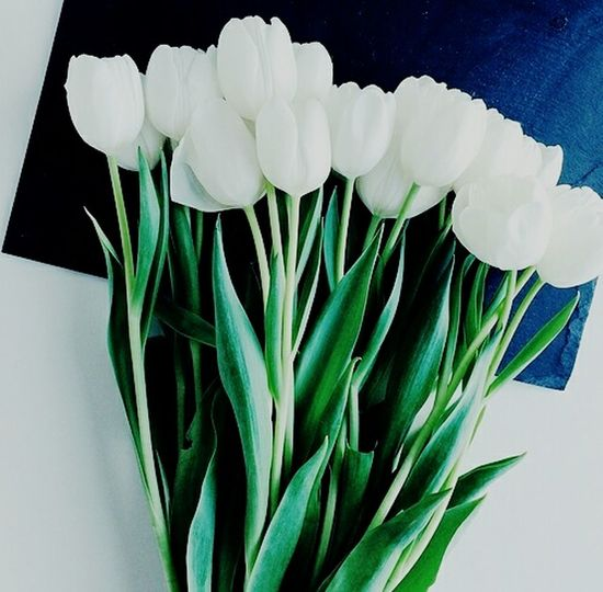 Sweet white tulips.. 🌷🌷🌷 Flower Freshness Plant White Color Fragility Leaf Nature Growth Beauty In Nature Flower Head Close-up Green Color No People Horizontal Flowershop On The Street🌷💕 Beauty In Nature Blossom Plant Home Interior Home Sweet Home Tulipseason Tulip Love Tulipmania Flower Photography Day