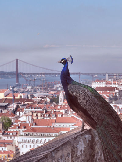 View of bird in city against sky