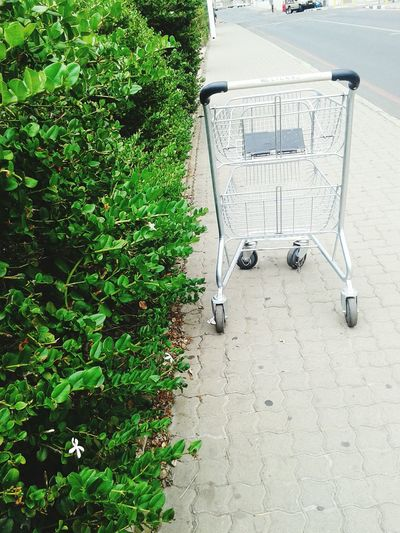 Empty trolley Green Color Nature Tree