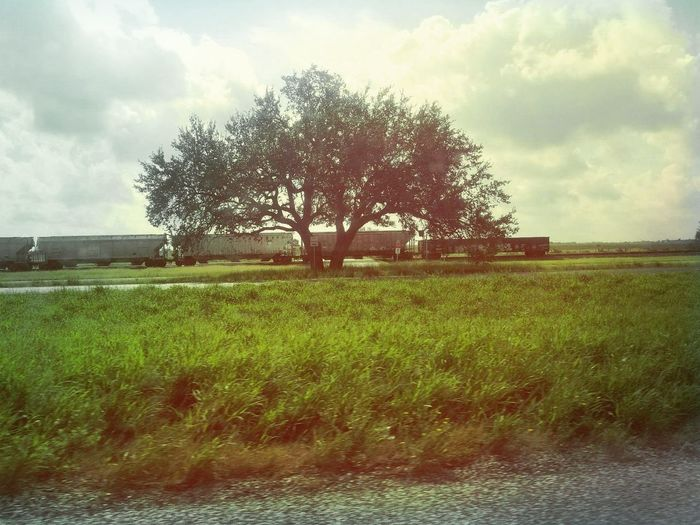 Tree Cloud - Sky Agriculture Field Outdoors Rural Scene Sky Day Spraying Nature No People Water Beauty In Nature Train Lonesometree Tree