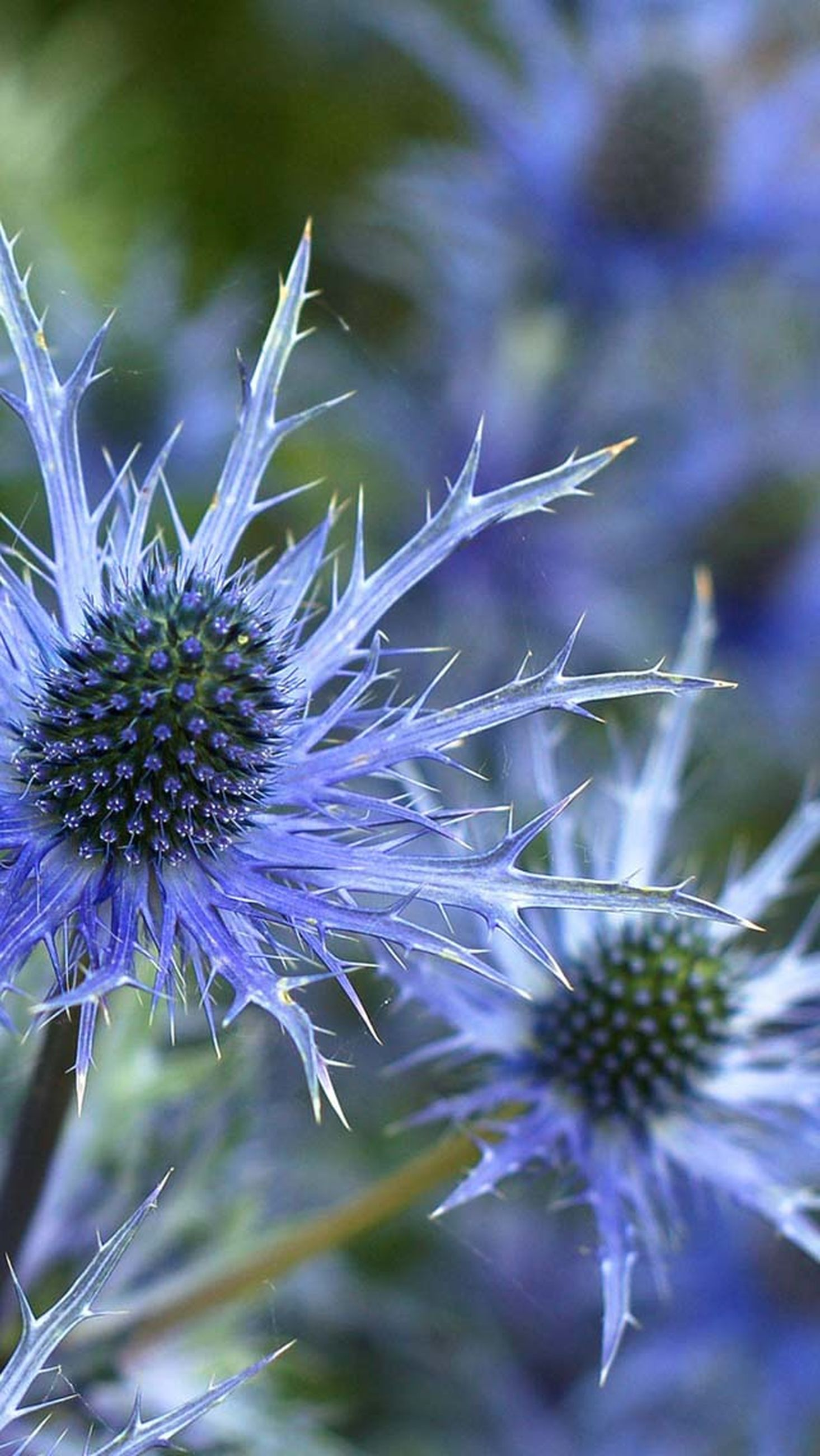 flower, fragility, freshness, growth, close-up, focus on foreground, plant, beauty in nature, flower head, nature, selective focus, purple, blooming, petal, stem, day, outdoors, no people, in bloom, wildflower