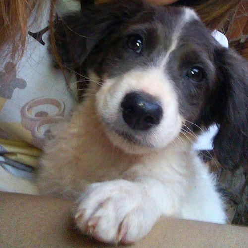 Dog Cachorro Pet Doggy Cãozinho Dogcute Dog Love Meucachorro Mydog Shadow