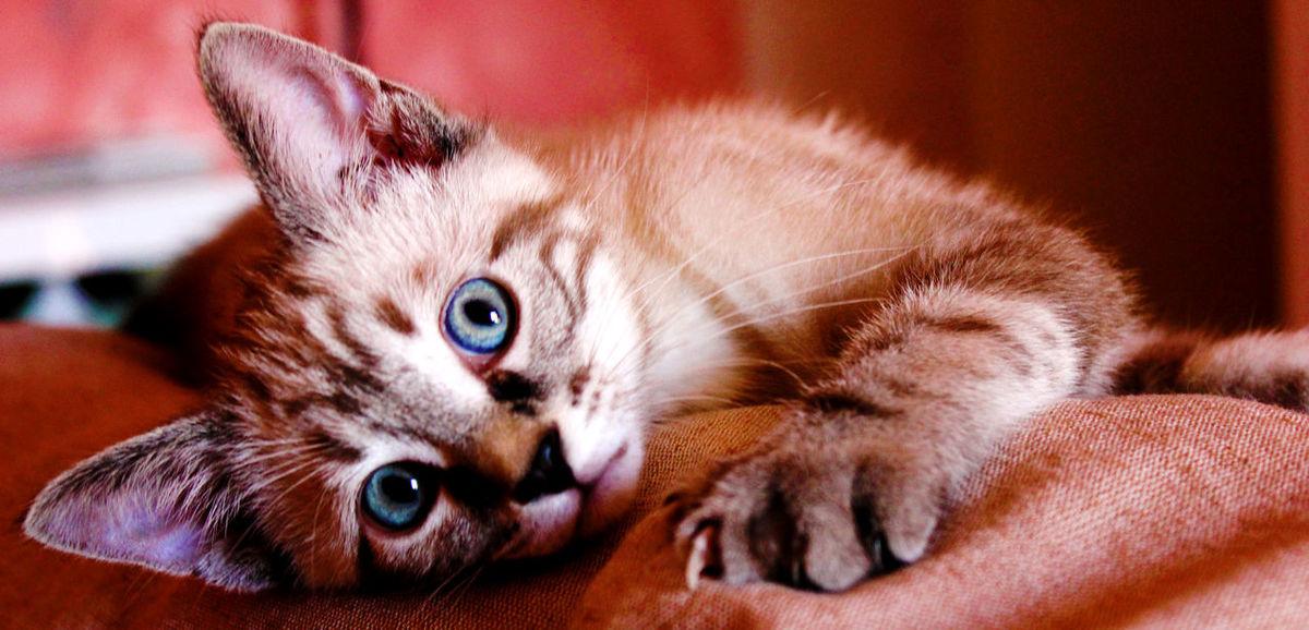 Cats Of EyeEm Cats 🐱 Cat Cat Lovers Catsofinstagram Close-up Domestic Animals Domestic Cat Feline Gatto Hugo The Cat Pets Pet Portraits