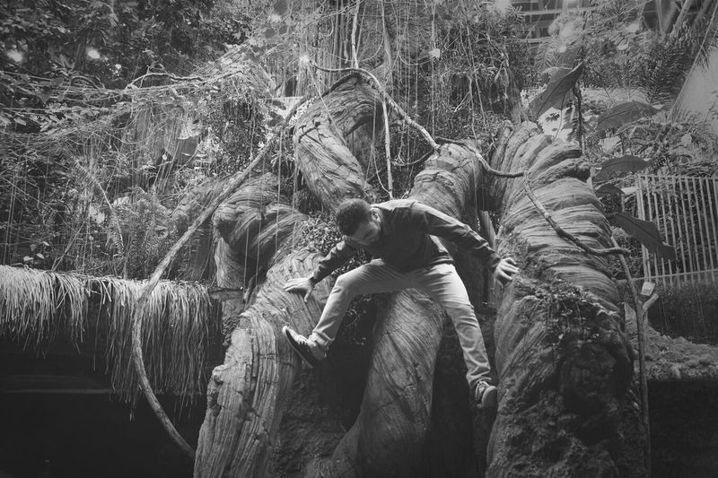 Me Climbing Forrest Trees