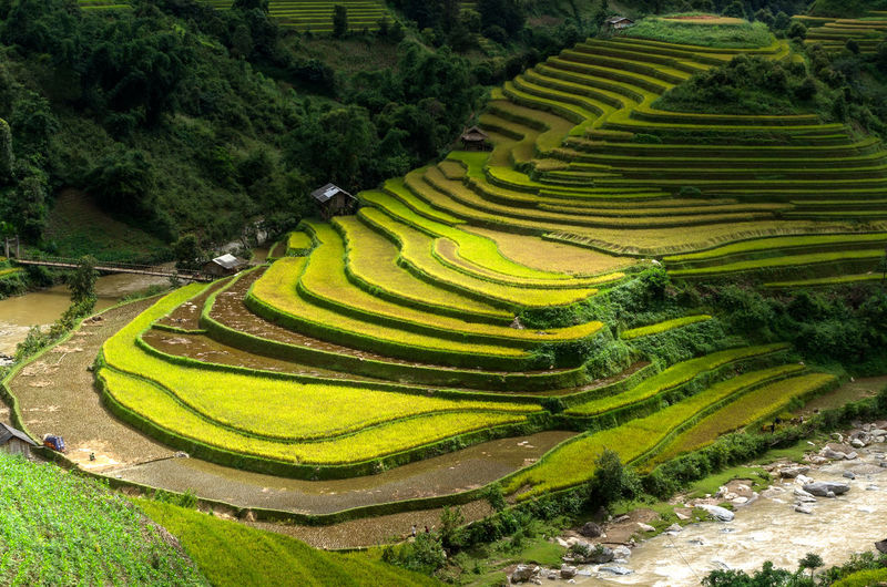 Rice fields on terraced of Mu Cang Chai, YenBai, Vietnam. Rice fields prepare the harvest at Northwest Vietnam. Vietnam Chai Cang Mu Rice Field Farm Thailand Agriculture Green Terrace Asian  ASIA Nature Plant Landscape Yênbài Travel Malaysia Mountain Food Valley Burma Bali Sapa Environment Earth Land Curve Ecology Soil Rough Horticulture Plantation Ground Harvest
