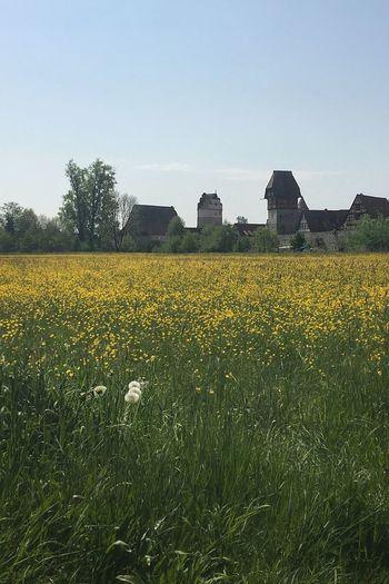 Meadow. Plant