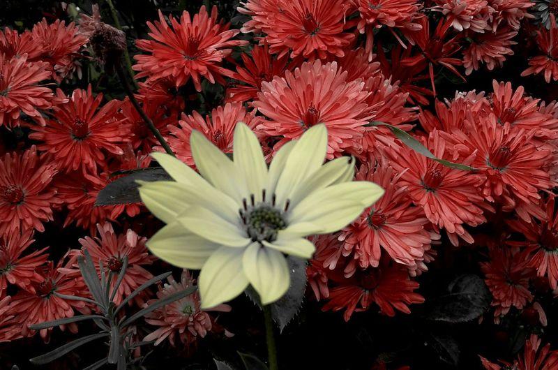 .My Garden. Flower Red Yellow Enjoy The Nature