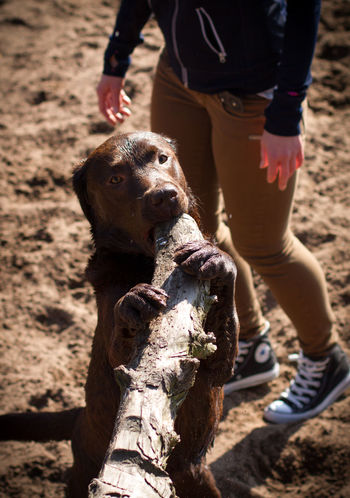 Animal Themes Day Dog Domestic Animals Field Human Body Part Human Hand Human Leg Leisure Activity Lifestyles Low Section Mammal Nature One Animal One Person Outdoors People Pets Real People Sand Standing Sunlight