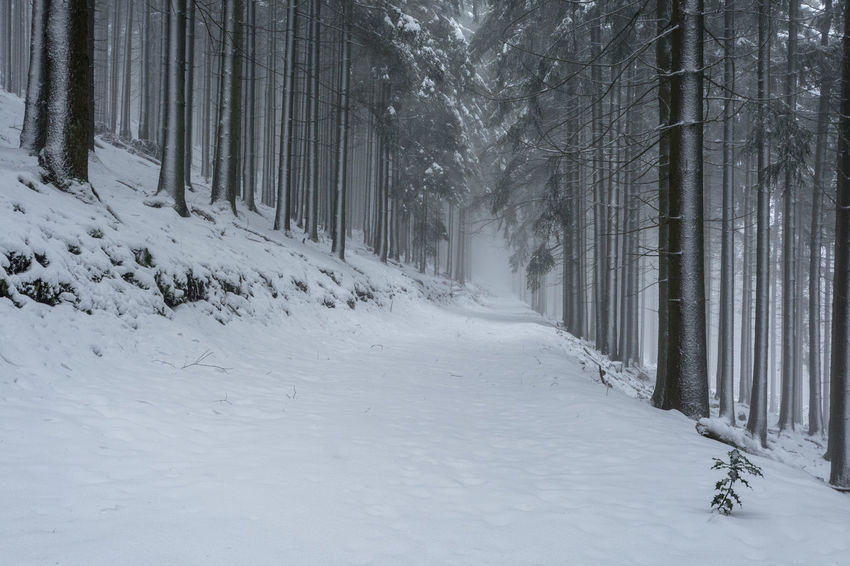 Winter im Nationalpark Hunsrück-Hochwald Beauty In Nature Branch Cold Temperature Day Forest Landscape Nature No People Outdoors Scenics Snow Snowing Tranquil Scene Tranquility Tree Tree Trunk Way Weather Winter