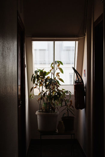 Potted plants on window at home
