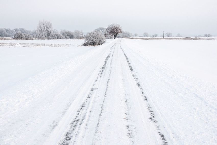 Leading Lines Winter Winter Wonderland Road Trees Minimalism Snow Wintertime Brandenburg Germany White It's Cold Outside Learn & Shoot: Leading Lines Landscapes With WhiteWall