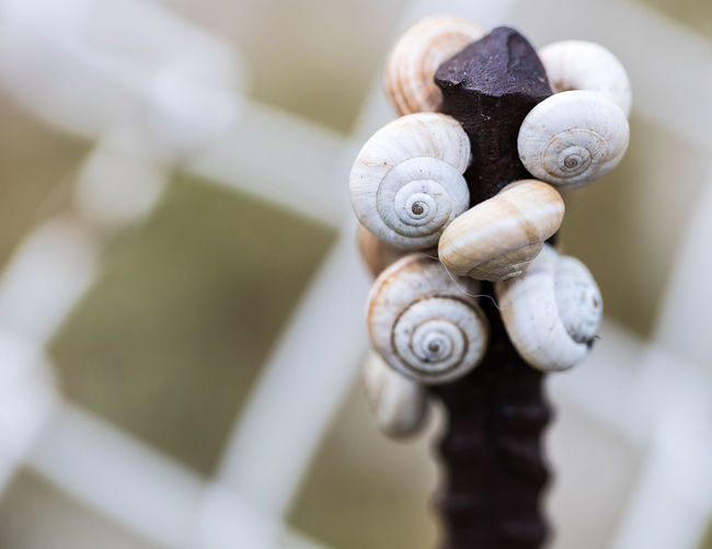 EyeEmNewHere Animal Animal Shell Animal Themes Animal Wildlife Beauty In Nature Close-up Day Extreme Close-up Focus On Foreground Gastropod Invertebrate Mollusk Natural Pattern Nature No People Ornate Selective Focus Shell Snail Spiral Swirl