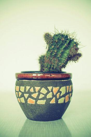 Cactus Flowers Flowers,Plants & Garden Cactus Flower