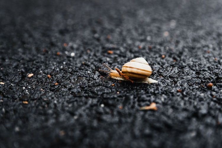 Animal Themes Animal One Animal Animal Wildlife Selective Focus Animals In The Wild No People Invertebrate Close-up Insect Nature Day Road Outdoors Beauty In Nature City Asphalt Street Shell Animal Shell Crawling Marine Slow Time Speed Focus Sharp Concept Nikon D7500