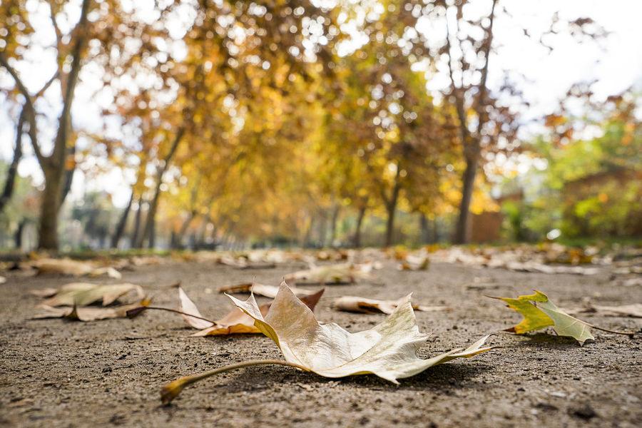 Autumn Autumn Autumn Collection Autumn Colors Beauty In Nature Hojas De Otoño Santiago Scl Tierra Mia Tree Trees Yellow Color