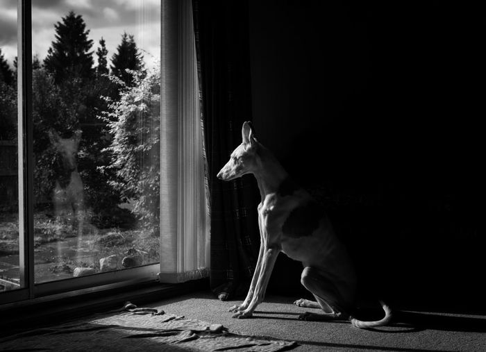 Dog looking away while sitting on window
