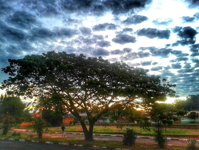 Tree and the Sky. I am in Love with Nature. Penapolis Brazil