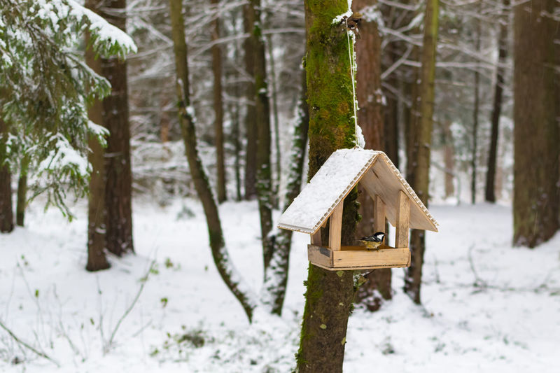 Great tit perching on birdhouse in forest during winter