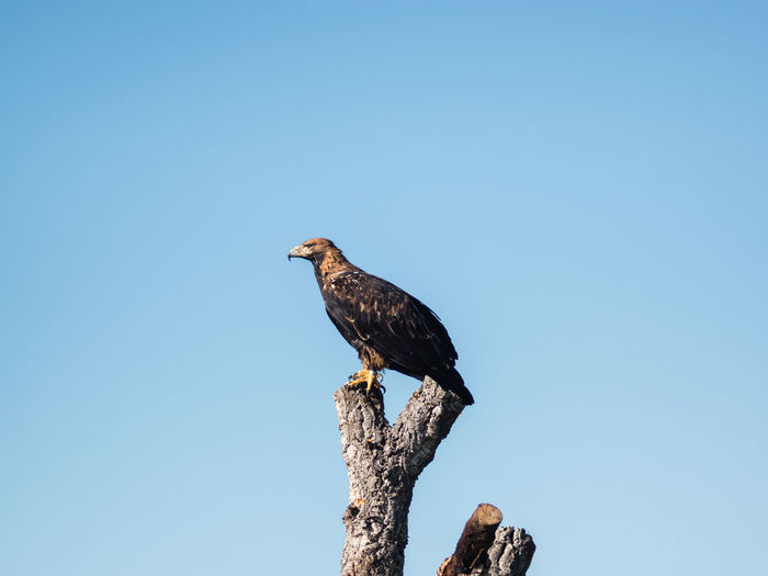 Low angle view of eagle perching on tree