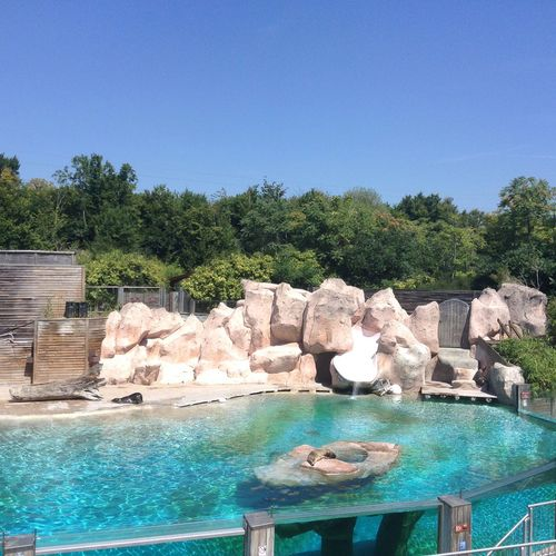 Zoo Zoo D'amneville Amnéville  Otarie Soleil Sun Hot Day Calor EyeEm Nature Lover