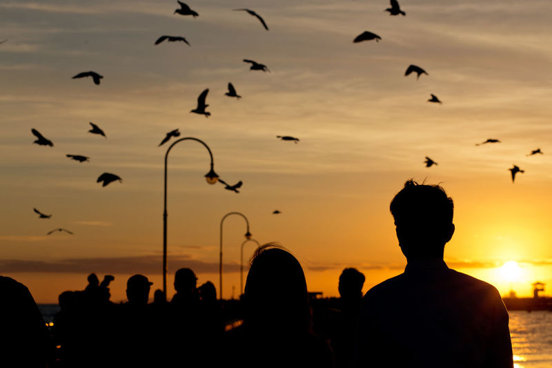 Silhouette Birds Flying Over People Against Sky During Sunset