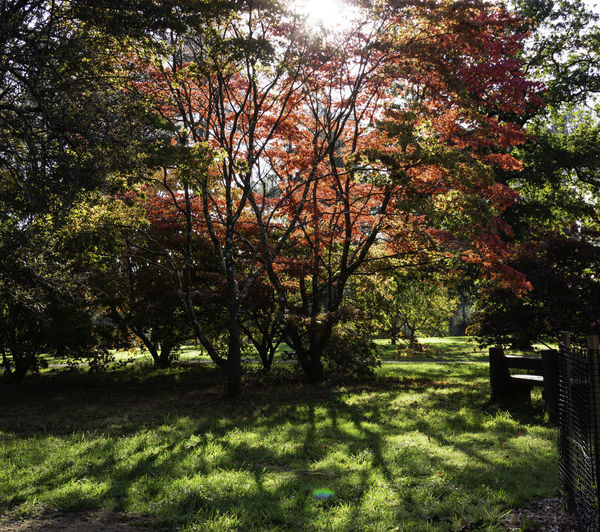 Tree Plant Nature Autumn Beauty In Nature Outdoors Sunlight Tranquil Scene No People Shadow