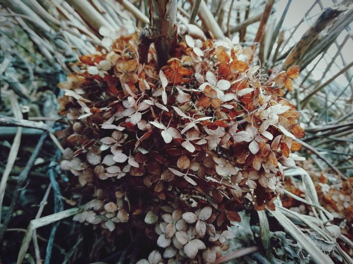 Tree Branch Cold Temperature Winter Snow Leaf Close-up Plant Catkin Wilted Plant Pinaceae Pine Cone Dried Plant Dead Plant Needle - Plant Part
