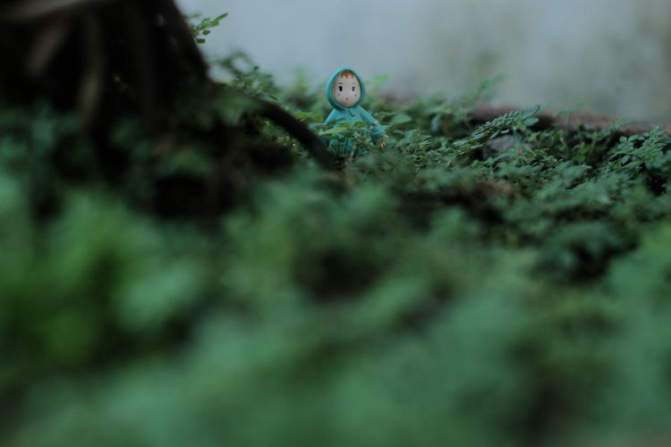 Doll amidst plants on field