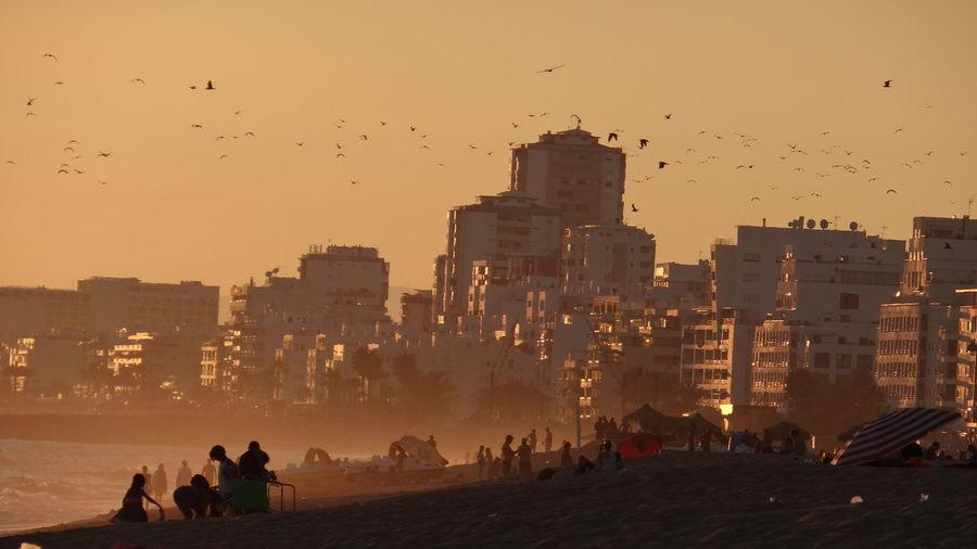 Birds flying over cityscape against sky during sunset