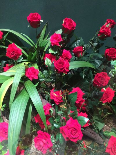 Plant Flower Flowering Plant Freshness Beauty In Nature Growth Fragility Pink Color Leaf Plant Part Red Petal High Angle View Green Color Close-up No People Nature