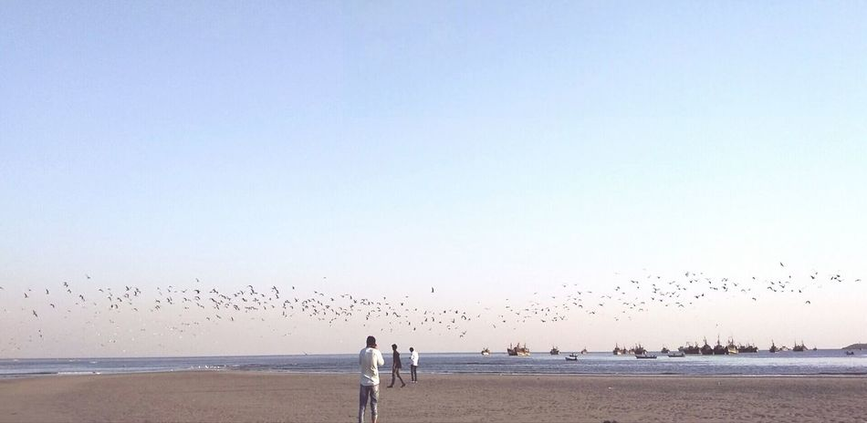 Beach Sea Water Nature Outdoors Sand Sky Flock Of Birds Horizon Over Water People Real People Beauty In Nature Day Adult Animal Themes Adults Only
