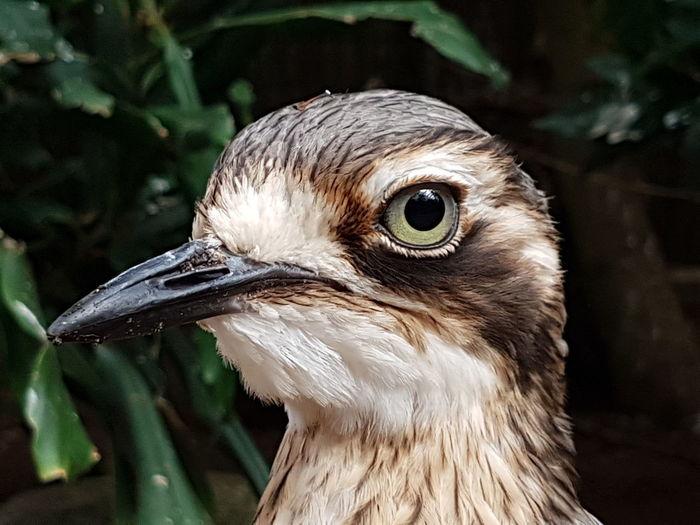 Avifauna Today ♥ Daylight Photography EyeEm Selects Bird Beak Black Background Portrait Feather  Headshot Eye Animal Eye Close-up