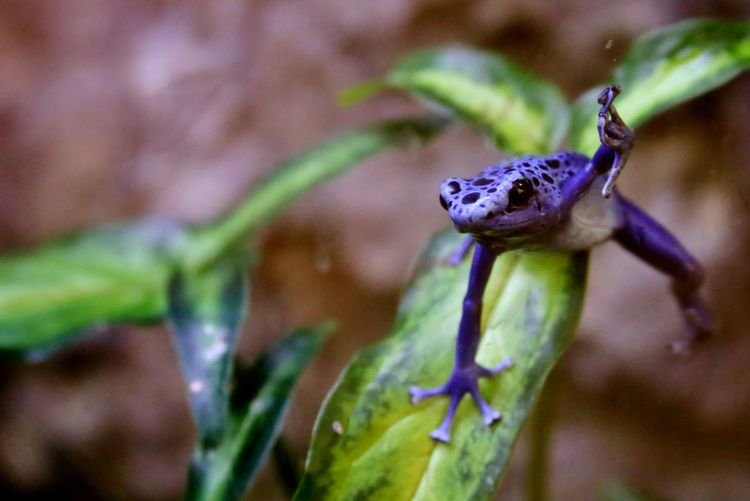Frogs Animals