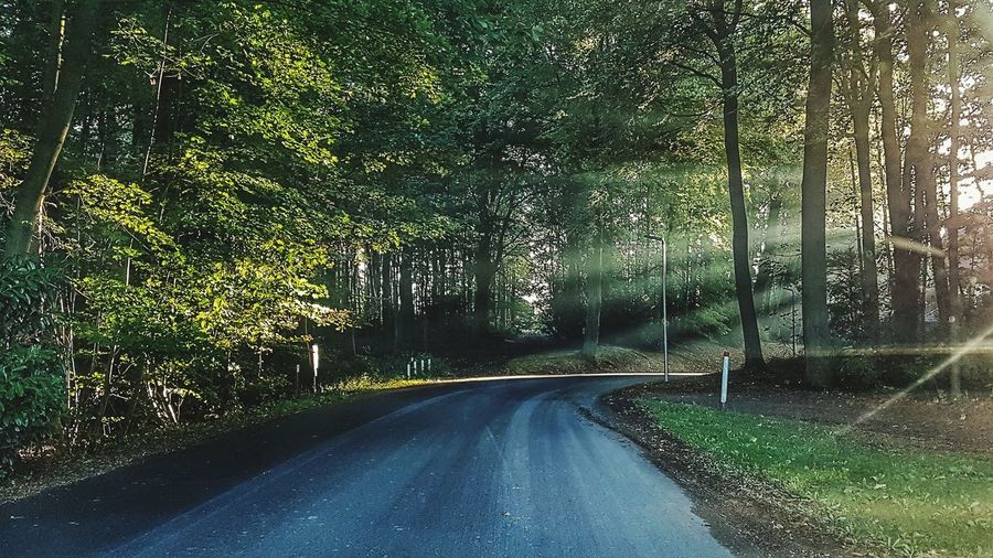 Sunrays Road The Way Forward Transportation Tree No People Nature Plant Diminishing Perspective Green Color Day Empty Road Windshield Reflection Sunray Of Light Flairs Samsungphotography Samsung Galaxy S7 Snapseed Herbststimmung