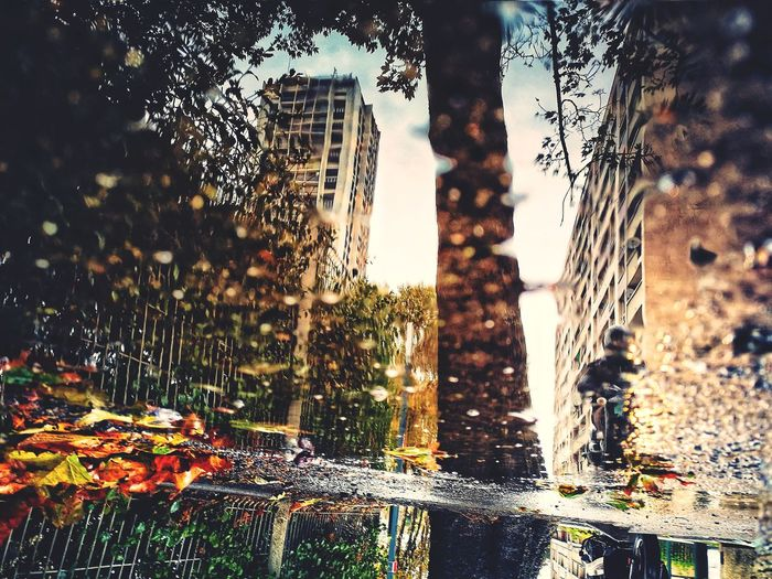 Urban autumn reflection Mobilephotography Photomobile Smartphonephotography #autumn #citylife Tree Water Drop Sky Close-up Rainy Season Rainfall