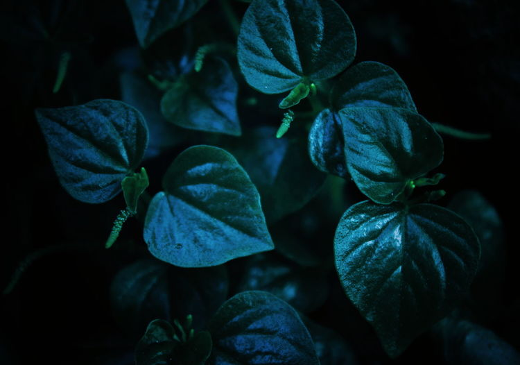 Directly Above Selective Focus Outdoors Fragility Growth Vulnerability  Beauty In Nature Nature Plant Nature Beauty In Nature Freshness Fresh Green Leaf Black Background Beauty Close-up Green Color Plant Life Plant Part Growing