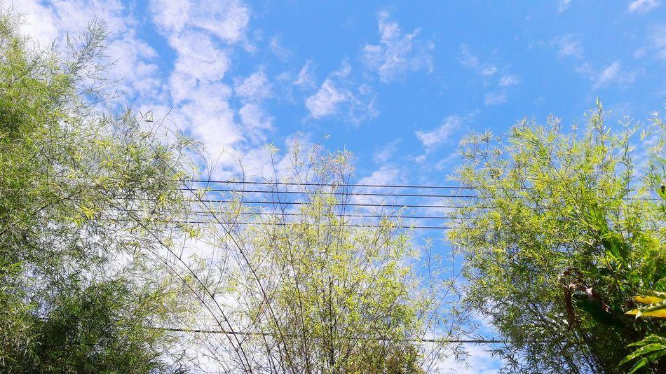 bright. Nature Cloud - Sky Sky Blue Day Outdoors No People Beauty In Nature Freshness Tree EyeEm Diversity EyeEm Nature Lover EyeEm Best Shots EyeEmNewHere Bamboo Long Goodbye