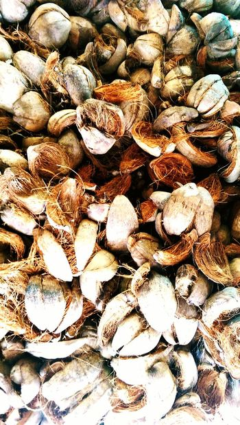 Coconut Husks Coconut Husk Close-up Nature EyeEmNewHere Beauty In Nature