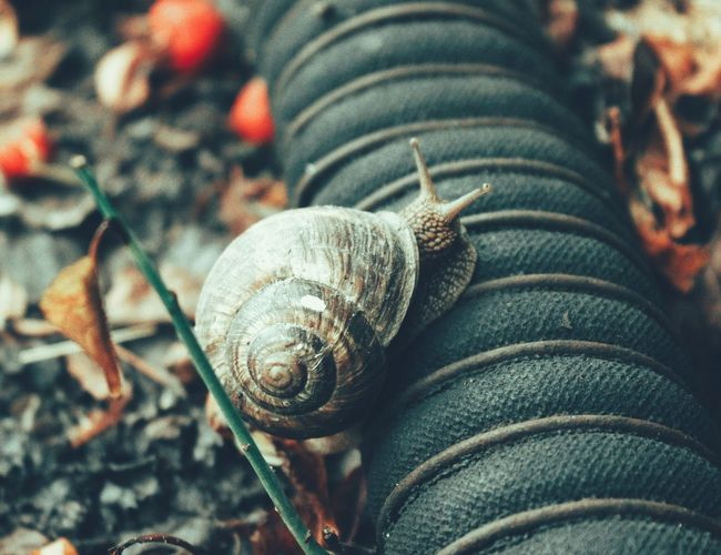 Close-up of snail crawling in the garden
