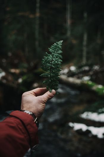 Close-up Dark Fern Fernsehturm Fir Tree Focus On Foreground Forest Forest Photography Freshness Green Green Color Green Color Hand Holding Human Body Part Human Hand Moss Nature Nature Nature_collection One Person People People And Places Pinaceae Tree