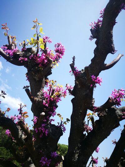 Springtime Spring Tree Flower Sky Close-up Plant Plant Life